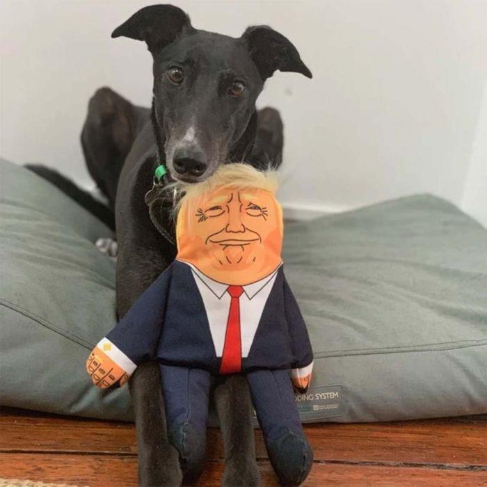 Präsidenten Hundespielzeug