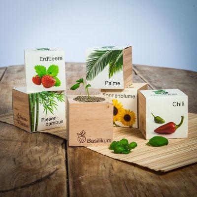 Kleine Geschenke - ecocube - Pflanzen im Holzwürfel