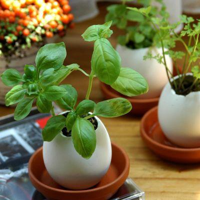 Ostergeschenke - Eggling - Kräuter-Eier