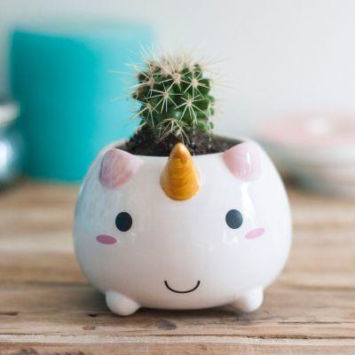 Geschenkefinder - Einhorn Mini Blumentopf
