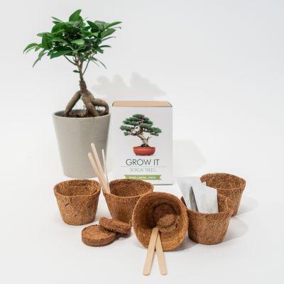 Neu bei uns - Grow It Bonsai-Bäume