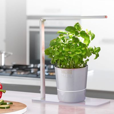 Home Gadgets - Herb Booster Kräuterlampe