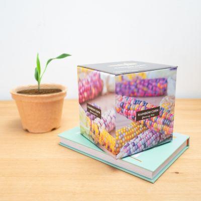 Essen & Trinken - Regenbogen-Maiskolben Aufzuchtset