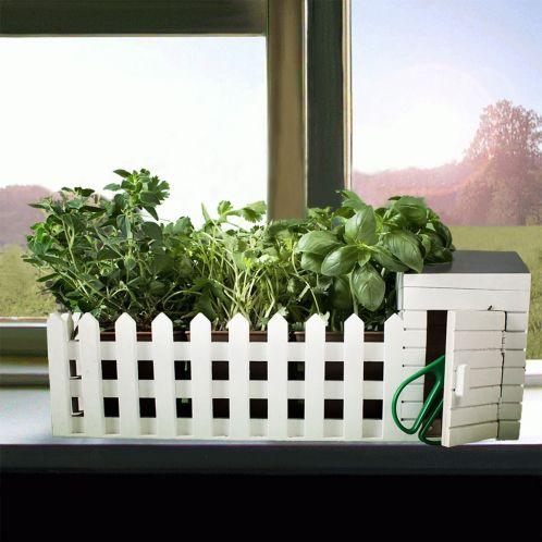 Mini Kräutergarten für drinnen