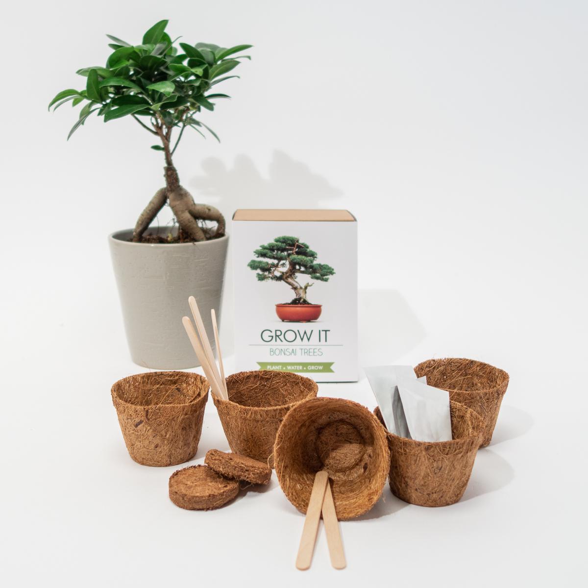 Grow It Bonsai Bäume