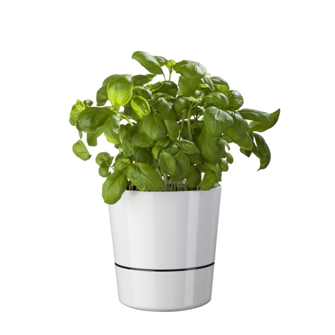 Herb Hydro Pot Blumentopf - Einzelstück
