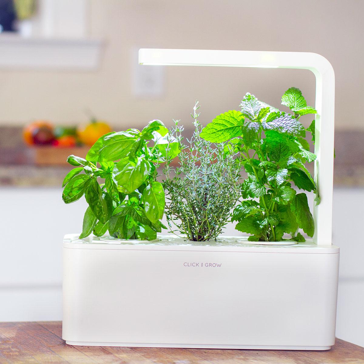 Click Grow Smarter Kräutergarten für drinnen